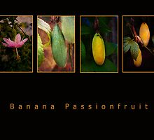 Banana Passionfruit by pennyswork
