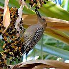 Gila Woodpecker & Berri~licious  by Kimberly Chadwick