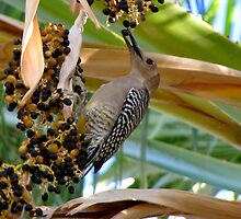 Gila Woodpecker & Berri~licious  by Kimberly Chadwick