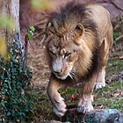 King of the beast by Ted Petrovits