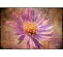 Textured Aster Photographic Print