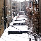 Back Yard Uban Winter by psphotogallery