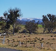 Snowy Mountains Pasture by David Hunt