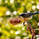 Bluebird by kim powell