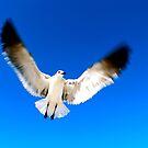 Take Flight by kim powell