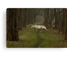 Sheep on the dike Canvas Print
