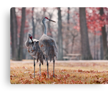 You Keep Watch While I Fix My Feathers Canvas Print