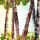 Birches lll by Sally Griffin