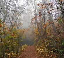 West Mountain Autumn Forest Fog by Lee Hiller
