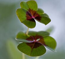 A lucky day  by Maria Ismanah Schulze-Vorberg