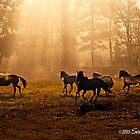 At Play in the Fields of the Lord by GrayHorseDesign