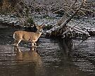River Crossing #55 by Rodney55