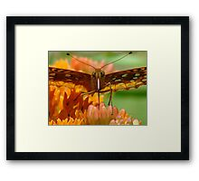 Great Spangled Fritillary Portrait Framed Print