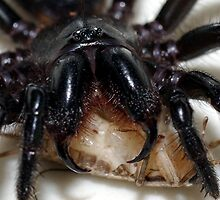 Funnel web by Grunto