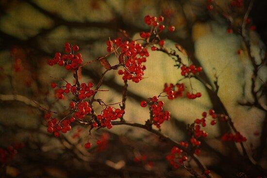 Autumnal Rowen by Sandra Cockayne