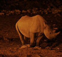 Rhino at a Floodlit Watering Hole - Etosha, Namibia by digsy
