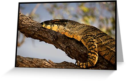 Goanna! by Anna Ryan