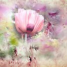 Romantic Poppy by Anivad - Davina Nicholas