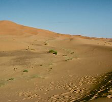 The Dunes at Merzouga by David Davies