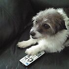 Don't you dare take that channel changer. by Anne Gitto