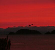 The Bald Eagle In The Red Sky by Gail Bridger