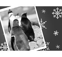 Penguin Christmas Card Photographic Print