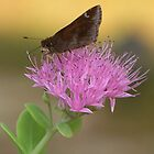 Skipper Butterfly by Penny Odom
