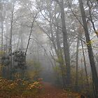 The Enchanted Forest Fog Mirage by Lee Hiller