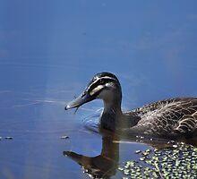 If it quacks like a... by petejsmith