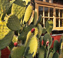 Cactus Berries by Renee D. Miranda