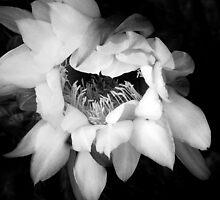 Awakening ~ Black & White by Lucinda Walter