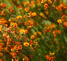 Orange Flowers #1 - Nov 2010 by tmac
