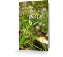 Purple Flower and Buds #1 - Nov 2010 Greeting Card