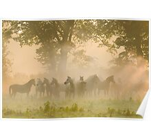 Arabian horses surrounded mist and light Poster