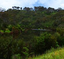 Drowning Trees - Googong #7a - Nov 2010 by tmac