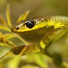 Green Tree Snake by Steve Bullock