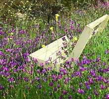 Bench'n Flowers #2 - Nov 2010 by tmac