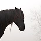Lost in a Fog by GrayHorseDesign