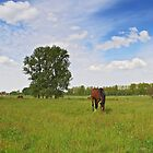 Landscape with Horses in Flanders by 7horses