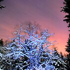 Winter Bliss by Tori Snow