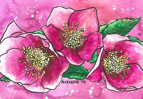 Pink Hellebores by Alexandra Felgate