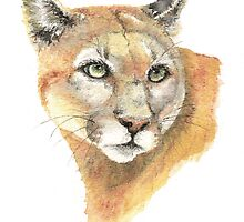 Cougar, Puma, Mountain Lion by countrymouse