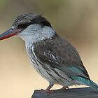 Striped kingfisher by jozi1