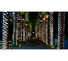 Palm Archway Photographic Print