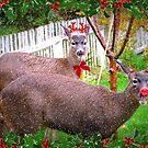 Reindeer Games by AngieBanta