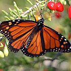 Monarch with Red Berries by RebeccaBlackman