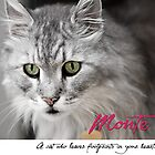 Monte - I purr therefore I am.... by Sue Hawken
