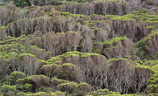 Coastal Vegetation, Chris Bell by Tarkine Trails Tasmania