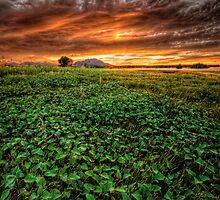 Field of Greens by Bob Larson