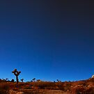 Joshua Trees by cnabholz